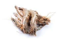 Fresh raw tiger prawns. Isolated on white background Royalty Free Stock Image