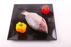 Fresh Raw Tilapia Fish. Raw fresh sea fish on black dish Stock Photos