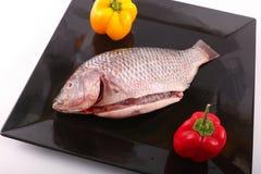 Fresh Raw Tilapia Fish. Raw fresh sea fish on black dish Stock Images