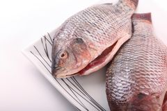 Fresh Raw Tilapia Fish. Raw fresh sea fish on white dish Royalty Free Stock Photos