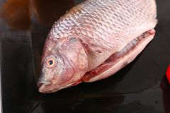 Fresh Raw Tilapia Fish top view. Raw fresh sea fish on modern dish on wooden table Royalty Free Stock Images