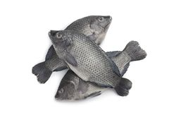 Fresh raw Tilapia fishes Royalty Free Stock Photography