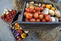 Fresh Raw Tomatoes, Orange, Potatoes, eggplant, onion, and sweet. Pepper in Wooden Box Stock Photography