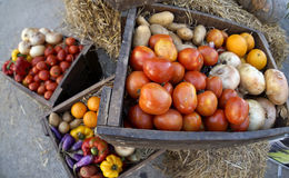 Fresh Raw Tomatoes, Orange, Potatoes, eggplant, onion, and sweet. Pepper in Wooden Box Stock Images