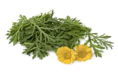 Fresh raw Tong ho spinach and flowers stock images