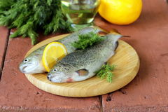 Fresh raw trout fish Stock Photos