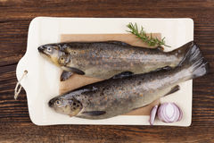 Fresh raw trout fish. Fresh raw marine brown trout fish on plate, wooden table from above. Culinary seafood eating Stock Photos
