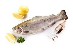 Fresh raw trout on white background stock photos
