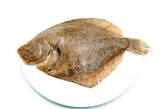 Fresh raw turbot fish on white plate. And white background Royalty Free Stock Image