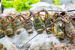 Fresh raw uncook Lobster Shrimp. On ice in luxury seafood street market in Thailand Stock Images