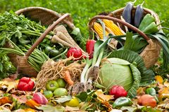 Fresh raw vegetables in grass Stock Images