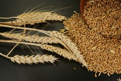 Fresh raw wheat seeds and ear of ripe wheat. On a black background conceptual of a staple nutritious grain food and healthy diet or allergy to gluten. Free copy royalty free stock photography