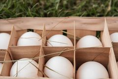 Fresh raw white chicken eggs in a wooden box on green grass. Ten. Chicken eggs. A dozen chicken eggs Stock Photo