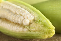 Fresh Raw White Sweet Corn. Sprinkled with water (Selective Focus, Focus on the corn grain in the front Stock Images