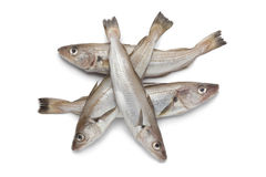 Fresh raw whiting Royalty Free Stock Photography