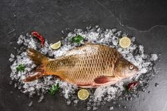Fresh raw whole mirror carp fish with spices, lemon on ice over dark stone background. Creative layout made of fish, Seafood stock photography