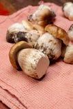 Fresh raw whole white boletus tasty edible mushrooms close up royalty free stock photos