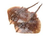 Fresh ray fish. Isolated on white background stock photo