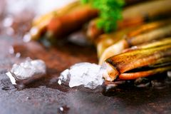 Fresh razor clams on ice, grey concrete background. Copy space, top view. Royalty Free Stock Image