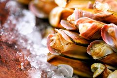 Fresh razor clams on ice, grey concrete background. Copy space, top view. Royalty Free Stock Photos