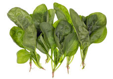 Fresh real green spinach Stock Photography