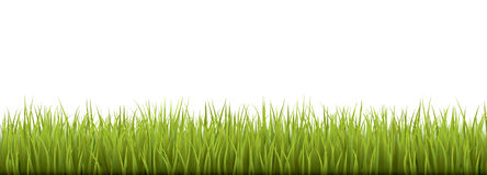 Fresh realistic green grass - vector illustration Stock Image