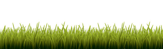 Fresh realistic green grass - vector illustration Stock Photos