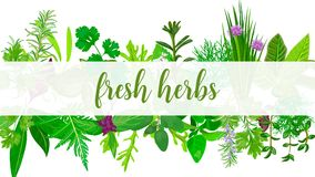 Fresh Realistic herbs and flowers with text. Horizontal. plants above and below. Concept idea for logo, tag, banner, prints, restaurant, wrapping, health Royalty Free Stock Photos