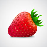 Fresh realistic strawberry. Isolated on white. Royalty Free Stock Photography