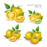 fresh realistic tomatoes. Vector illustration. Set of yellow fresh realistic tomatoes composition with leaves   on white background Stock Images