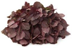 Fresh red amaranth Royalty Free Stock Photo