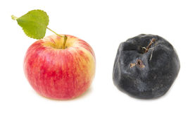 Fresh red apple and rotten apple old. The concept of youth and decay Stock Photography