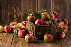 Fresh red apples in a basket stock images