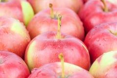 Fresh red apples closeup Stock Photo