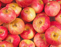 Fresh red apples closeup Stock Photo