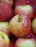 Fresh red apples. In a row as display royalty free stock photography