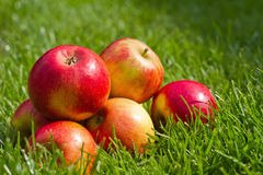 Fresh red apples in the lawn Royalty Free Stock Images