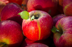 Fresh red apples. On a market closeup Stock Images
