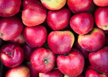 Fresh red apples Stock Images