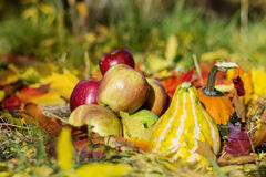 fresh red apples ,pumpkins and autumn leaves in an autumn garden Stock Images