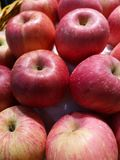 Fresh red apples are sold on shelves in supermarkets royalty free stock image