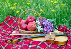 Fresh red apples in a wicker basket in the garden. Picnic on the grass. Ripe apples and violin. Plaid on the grass, apples, violin stock photo