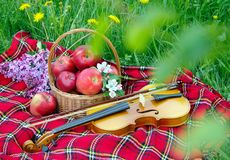 Fresh red apples in a wicker basket in the garden. Picnic on the grass. Ripe apples and violin. Plaid on the grass, apples, violin