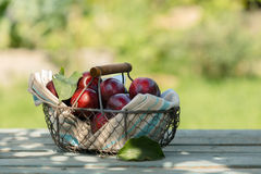 Fresh red apples in a wire basket Stock Photos