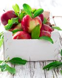 Fresh red apples Royalty Free Stock Photo