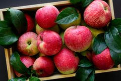 Fresh red apples in the wooden box on black background. royalty free stock photo