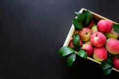 Fresh red apples in the wooden box on black background. stock image