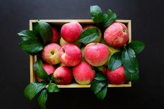 Fresh red apples in the wooden box on black background. royalty free stock images