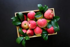 Fresh red apples in the wooden box on black background. stock images