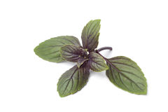 Fresh red basil leaves Stock Image